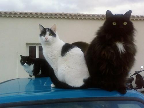 Vostok, Max et Nikita