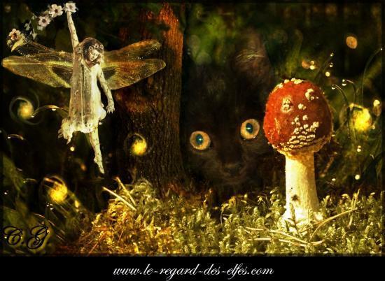 Le regard des Elfes par Céline Grandidier