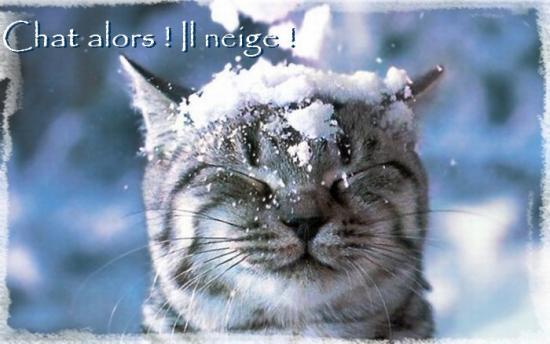 Chat alors,Il neige!